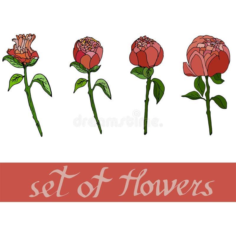 floral σχέδιο με τα peones με τα στοιχεία του σχεδίου επίσης corel σύρετε το διάνυσμα απεικόνισης διανυσματική απεικόνιση