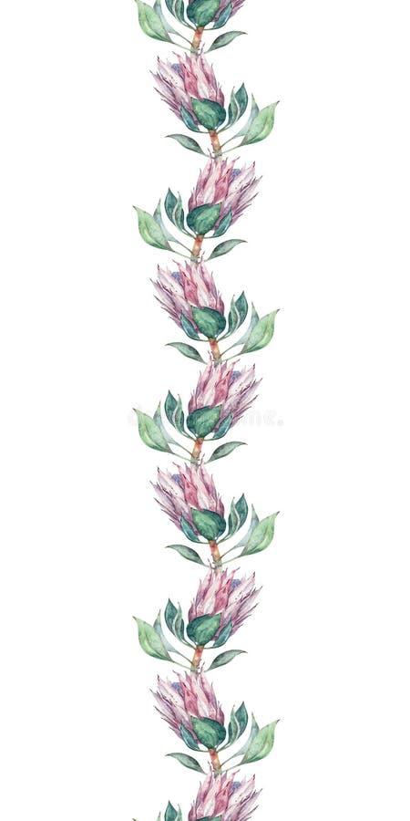 Floral σχέδιο συνόρων με το λουλούδι protea Άνευ ραφής υπόβαθρο για το σχέδιο υφάσματος ελεύθερη απεικόνιση δικαιώματος