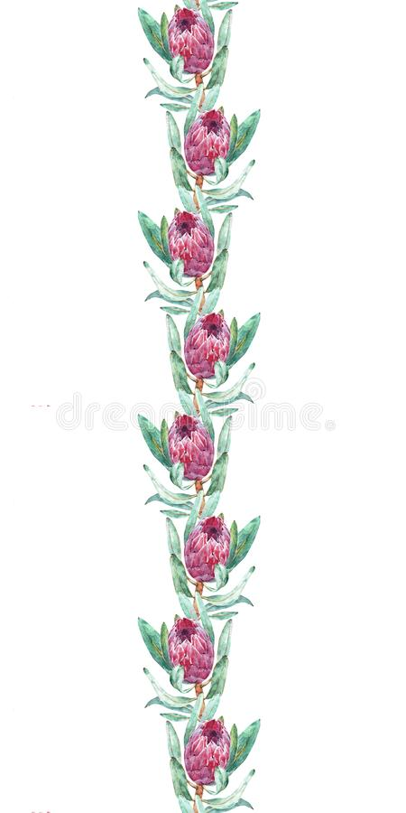 Floral σχέδιο συνόρων με το λουλούδι protea Άνευ ραφής υπόβαθρο watercolor για το σχέδιο υφάσματος απεικόνιση αποθεμάτων