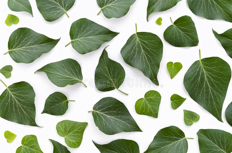 Floral σχέδιο φιαγμένο από πράσινα φύλλα στο άσπρο υπόβαθρο Επίπεδος βάλτε, τοπ άποψη Σύσταση σχεδίων φύλλων στοκ εικόνα με δικαίωμα ελεύθερης χρήσης