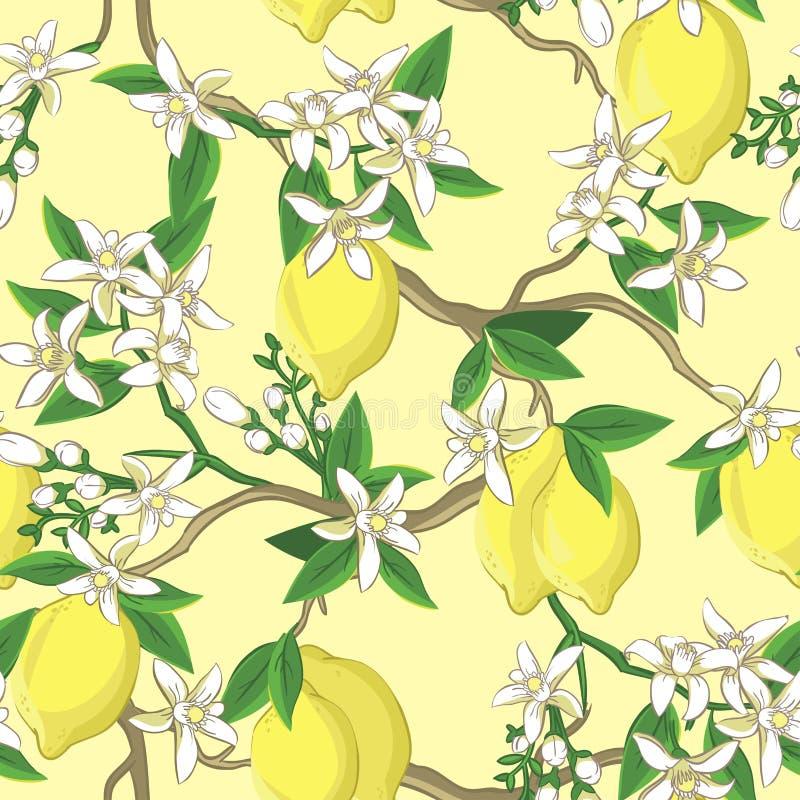 Floral σχέδιο με τα λεμόνια και τα άσπρα λουλούδια διανυσματική απεικόνιση
