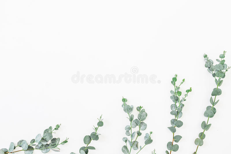Floral σχέδιο των φύλλων ευκαλύπτων που απομονώνεται στο άσπρο υπόβαθρο Επίπεδος βάλτε, τοπ άποψη στοκ φωτογραφίες με δικαίωμα ελεύθερης χρήσης