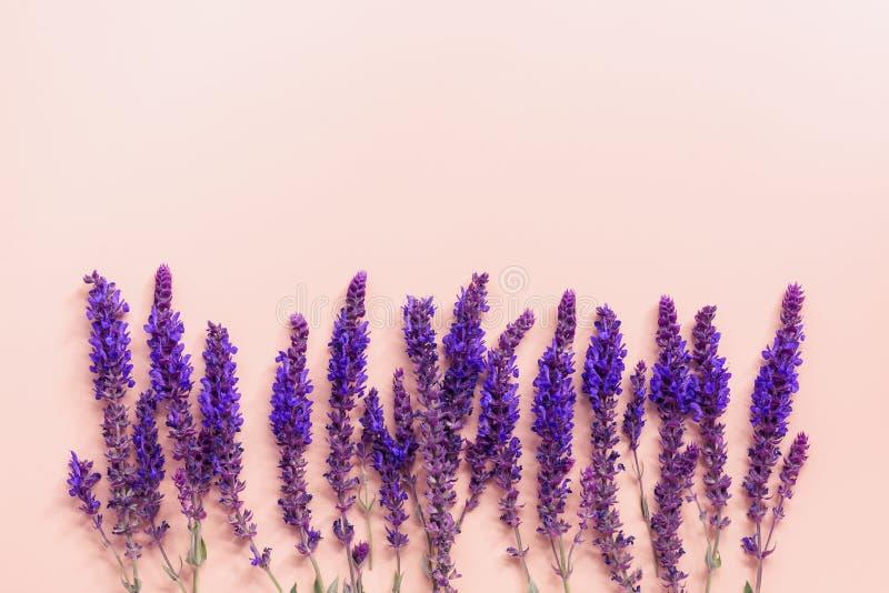 Floral σύνθεση της άγριας φασκομηλιάς λουλουδιών, σύνορα, ρόδινο υπόβαθρο κρητιδογραφιών Δημιουργική χλεύη επάνω r στοκ εικόνα με δικαίωμα ελεύθερης χρήσης