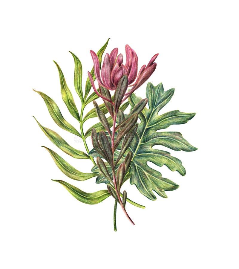 Floral σύνθεση των φύλλων φοινικών και του ρόδινου protea ελεύθερη απεικόνιση δικαιώματος