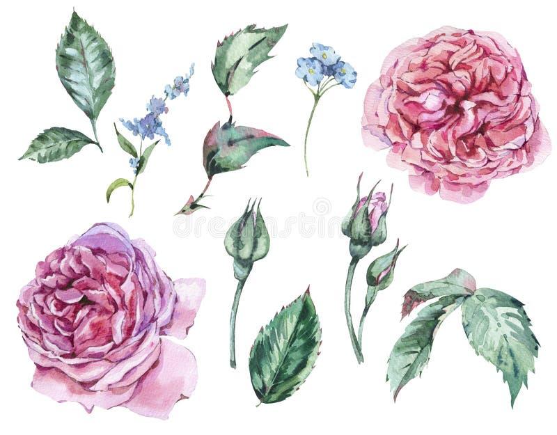 Floral σύνολο κλασσικών εκλεκτής ποιότητας κόκκινων τριαντάφυλλων Watercolor, φύλλα, Β ελεύθερη απεικόνιση δικαιώματος