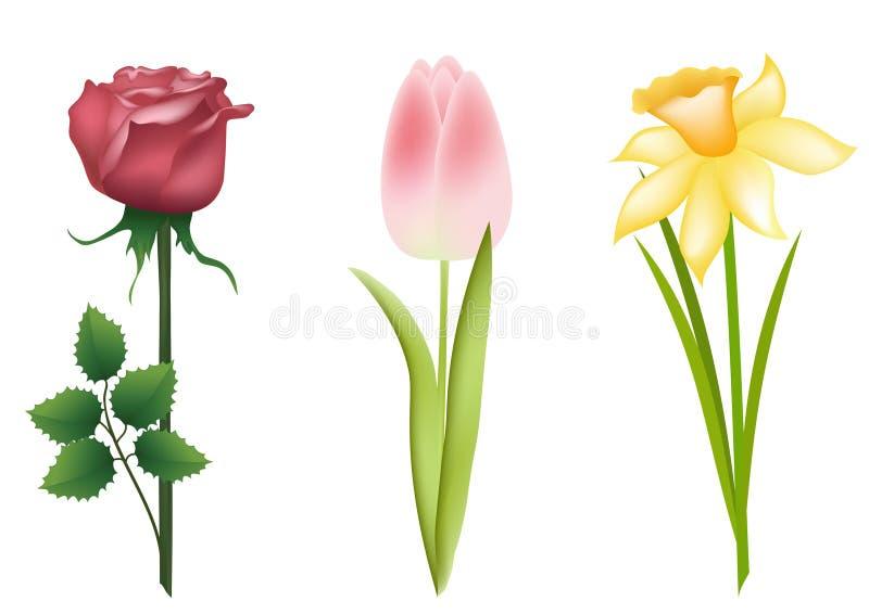 floral σύνολο ελεύθερη απεικόνιση δικαιώματος