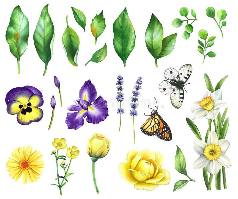 Floral σύνολο Watercolor ελεύθερη απεικόνιση δικαιώματος