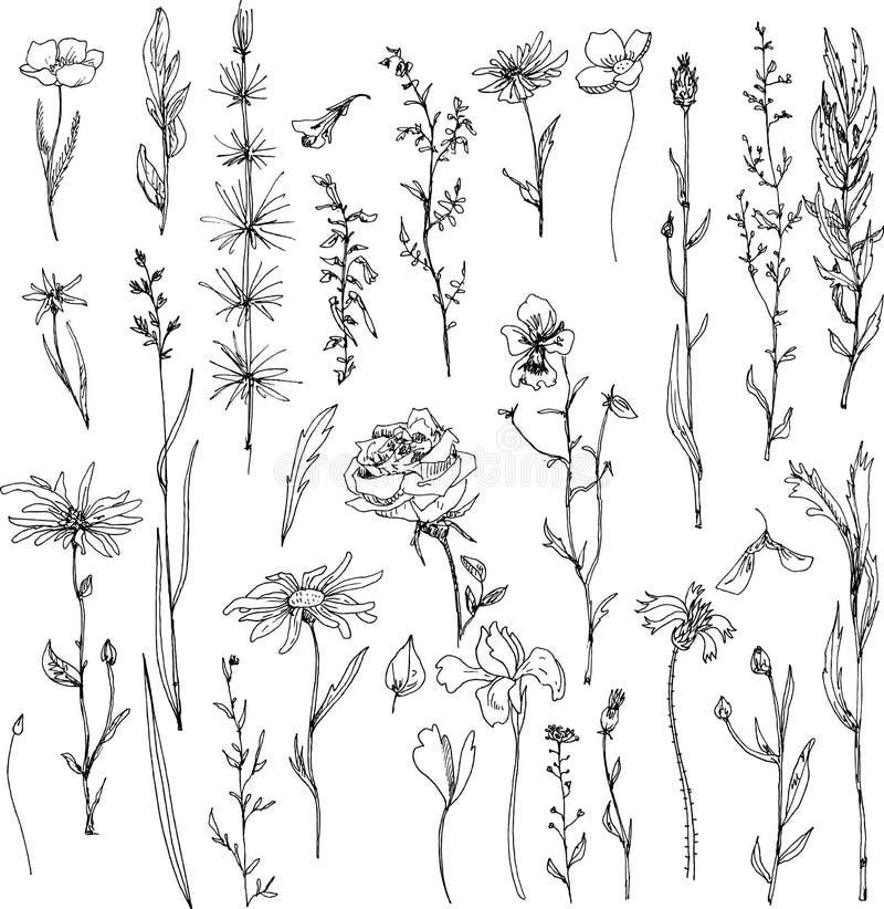 Floral σύνολο doodle απεικόνιση αποθεμάτων
