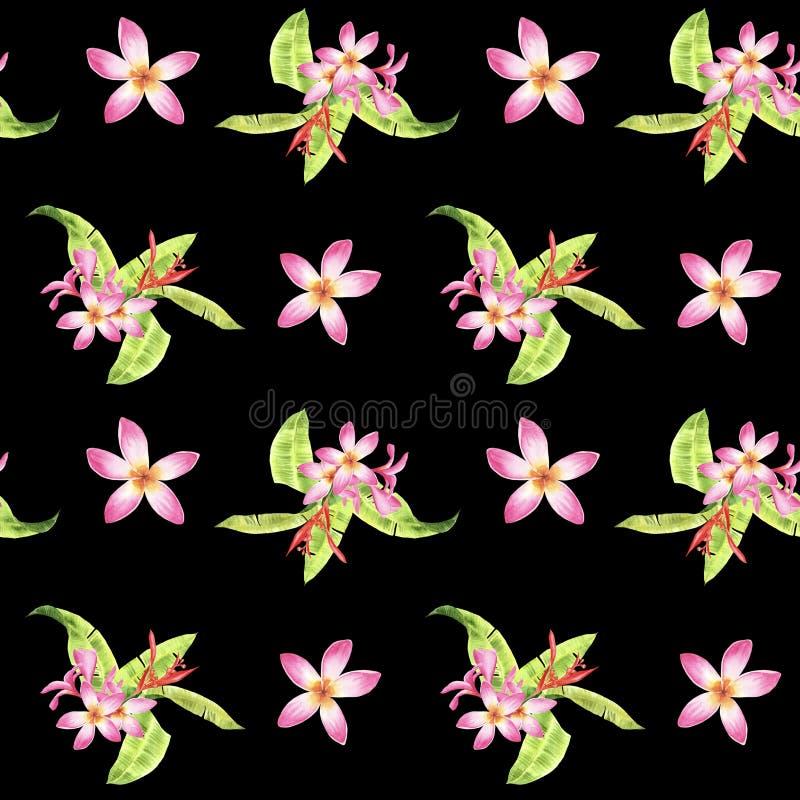 Floral τροπικό άνευ ραφής σχέδιο Watercolor με τα πράσινα φύλλα monstera και τα ρόδινα λουλούδια plumeria στο Μαύρο διανυσματική απεικόνιση