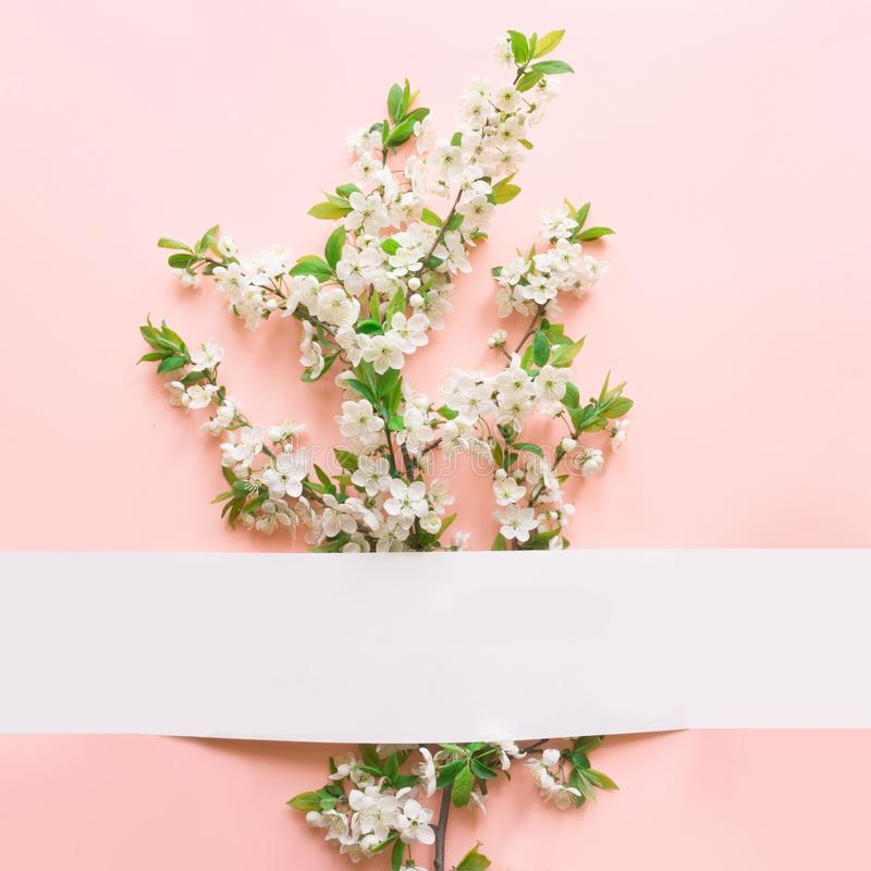 Floral υπόβαθρο άνοιξη των άσπρων λουλουδιών ανθών δαμάσκηνων στο ροζ Ευχετήρια κάρτα διακοπών ημέρας γυναικών και της μητέρας Σύ στοκ εικόνες
