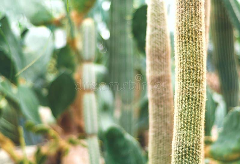 Floral υπόβαθρο κάκτων της θολωμένης, μονοχρωματικής σύνθεσης πράσινη διαβίωση στοκ φωτογραφία
