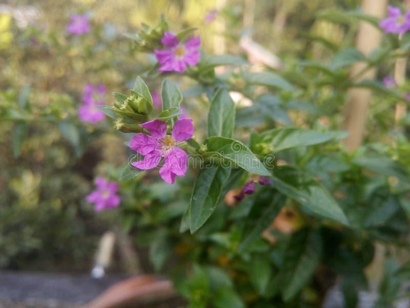 Floral υπόβαθρο λουλουδιών Garden στοκ εικόνες