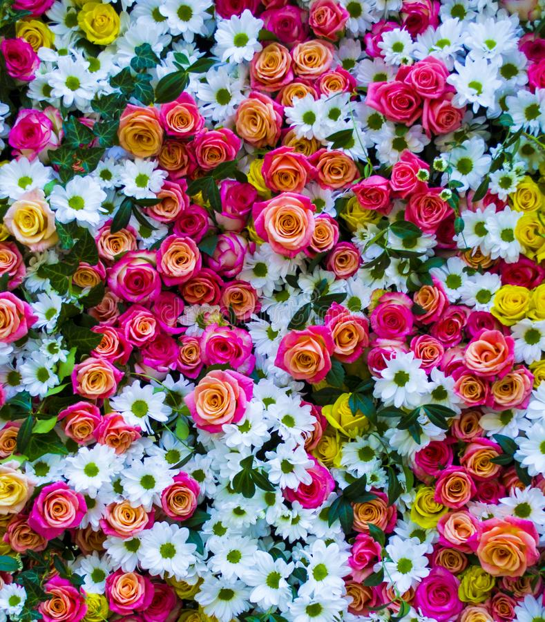 Floral υπόβαθρο με τα τριαντάφυλλα και τα χρυσάνθεμα τριαντάφυλλα στοκ φωτογραφία με δικαίωμα ελεύθερης χρήσης
