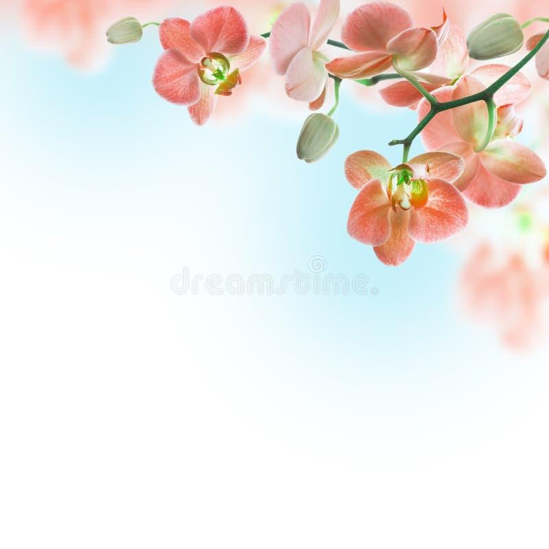 Floral υπόβαθρο τροπικού ελεύθερη απεικόνιση δικαιώματος