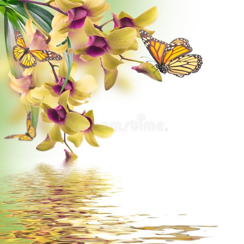 Floral υπόβαθρο τροπικού στοκ εικόνα με δικαίωμα ελεύθερης χρήσης