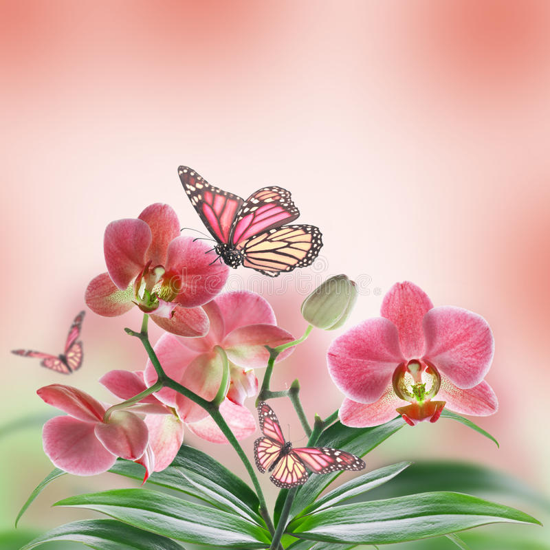 Floral υπόβαθρο στοκ φωτογραφία με δικαίωμα ελεύθερης χρήσης
