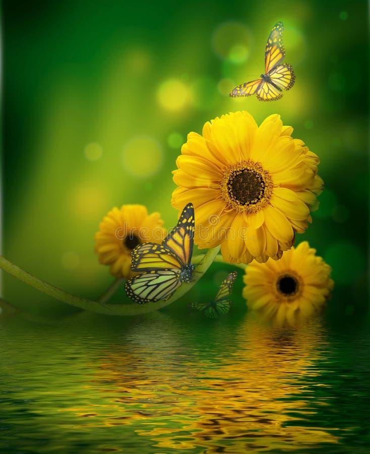 Floral υπόβαθρο, gerbery στοκ εικόνα με δικαίωμα ελεύθερης χρήσης