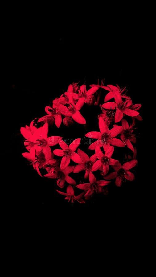 floral stock abbildung