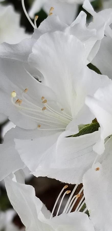 floral stockfoto