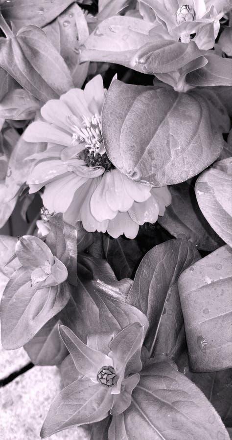 floral stockfotos