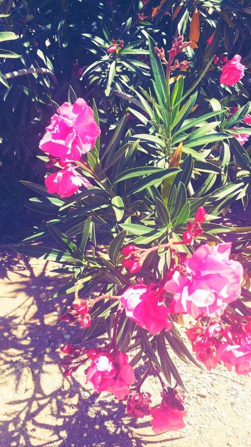floral lizenzfreies stockbild