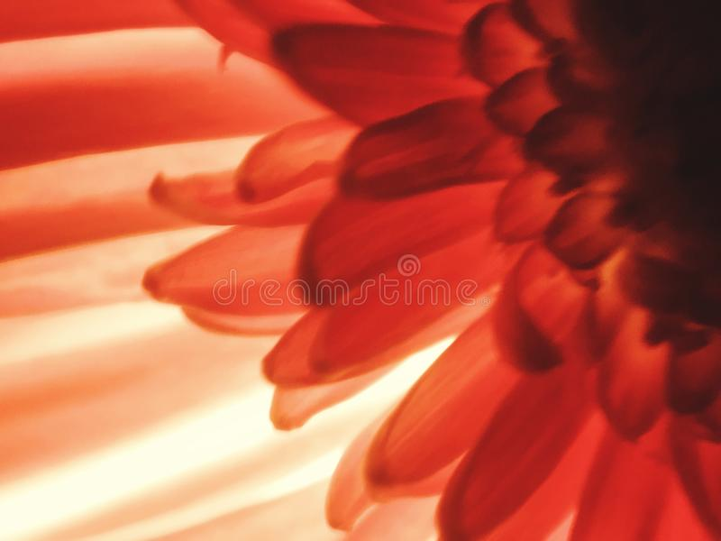 floral στοκ εικόνα με δικαίωμα ελεύθερης χρήσης