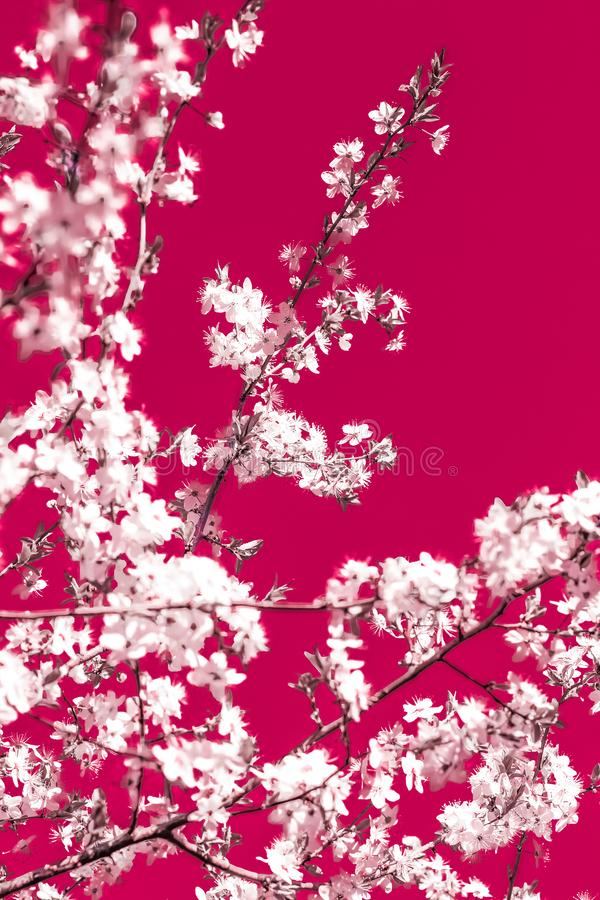 Floral abstract art on maroon background, vintage cherry flowers in bloom as nature backdrop for luxury holiday design stock images