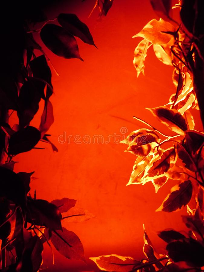 Floral Abstract royalty free stock photos