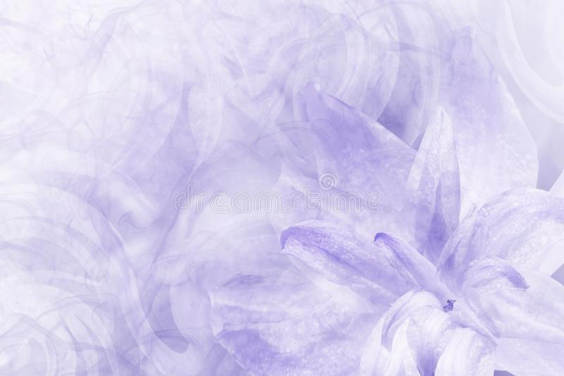 Floral abstract light blue-white background. Petals of a lily flower on a white blue frosty background. Close-up. Flower collag stock images