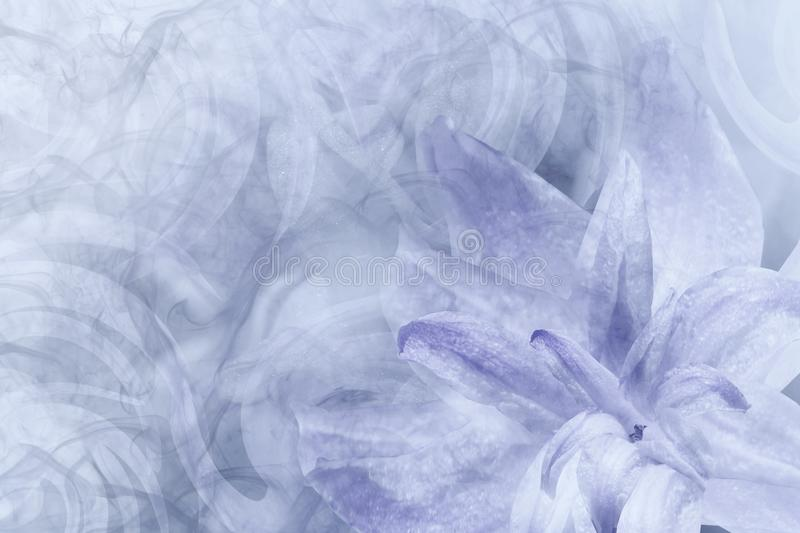 Floral abstract light gray-white-violet background. Petals of a lily flower on a white-violet frosty background. Close-up. Flow royalty free stock images