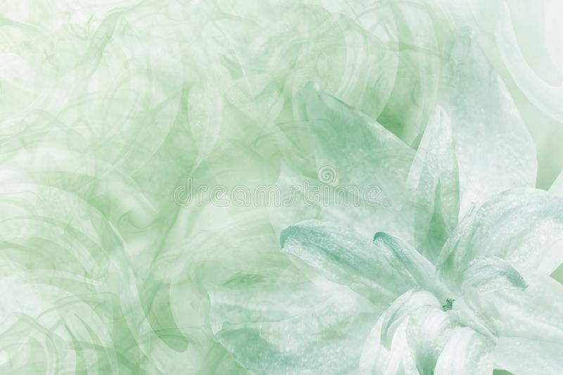 Floral abstract light green-white background. Petals of a lily flower on a white-green frosty background. Close-up. Flower coll. Age for postcard. Nature royalty free stock photos