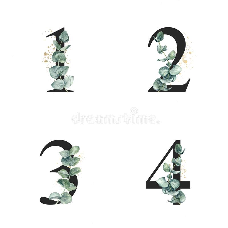 Floral alphabet numbers with watercolor eucalyptus sprigs and gold splash. royalty free illustration