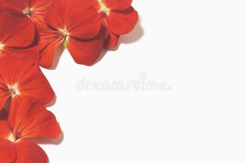 Floral composition stock image