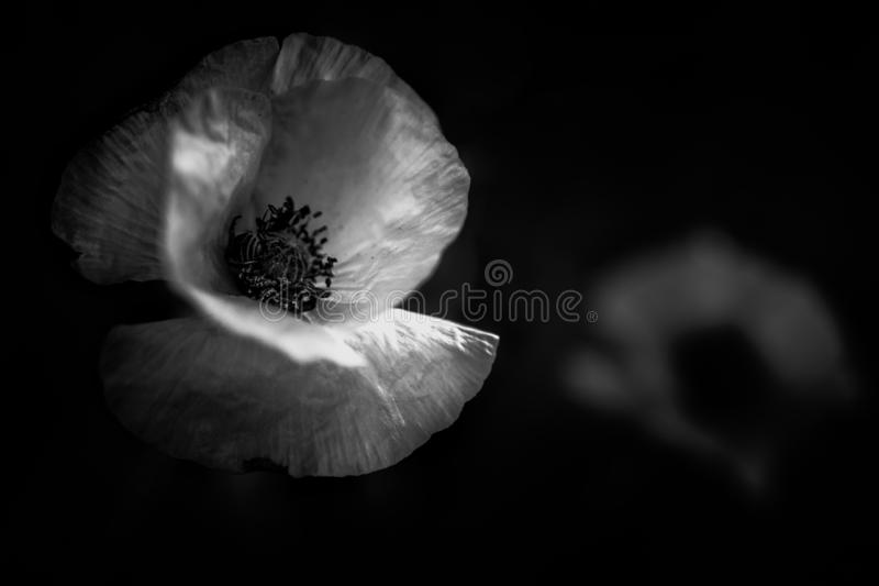 Floral art in black and white stock image