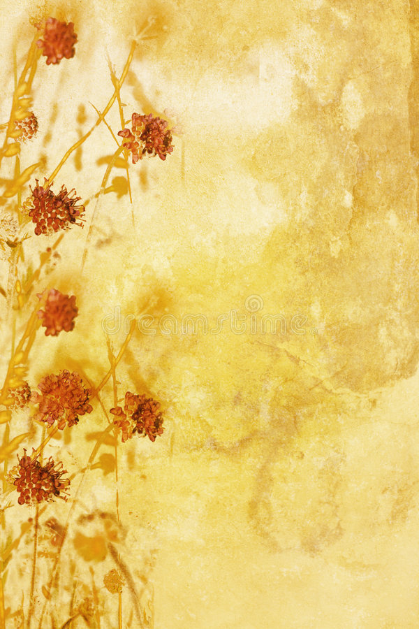 Floral autumn bacground royalty free stock photo