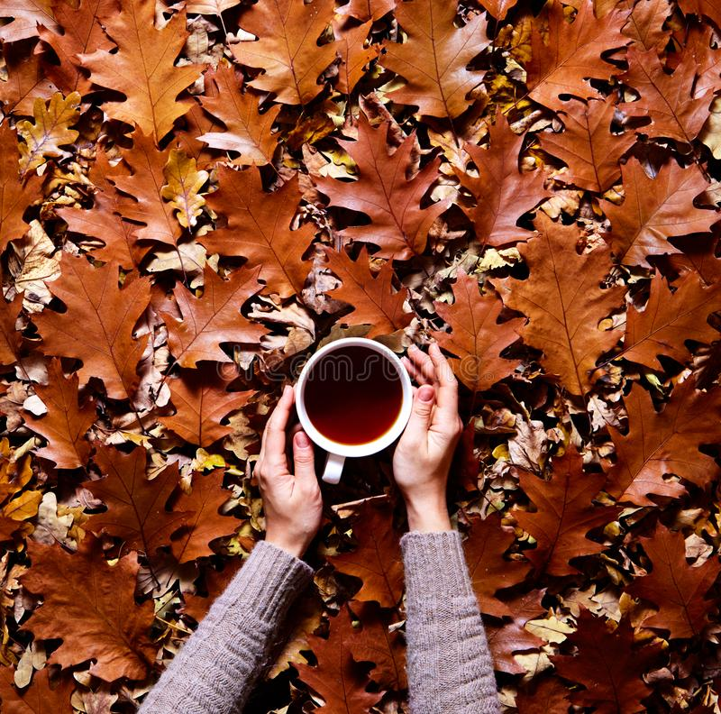Floral autumn background. A mug of coffee in a woman`s hands in a sweater on the fallen orange leaves of oak background. Floral autumn background. A mug of tea stock photo