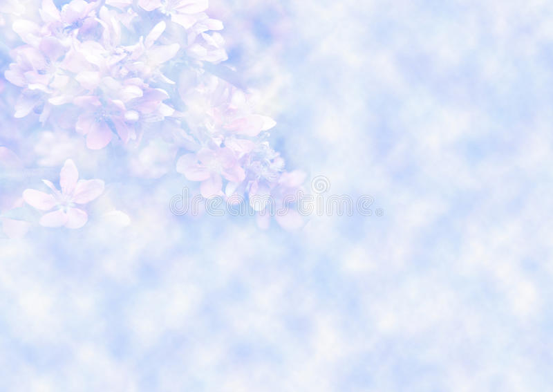 Download Floral background stock photo. Image of love, garden - 18981450