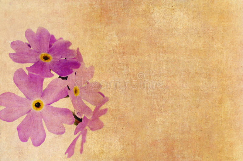 Floral background. Grunge background with floral elements and earthy texture stock images