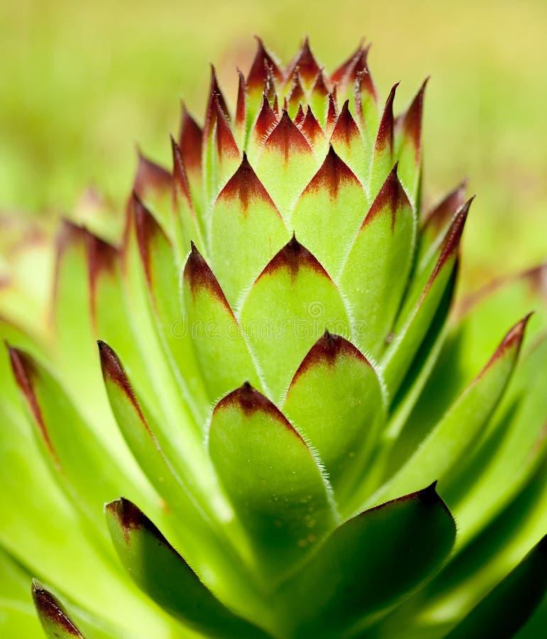 Download Floral background stock image. Image of background, color - 25451249
