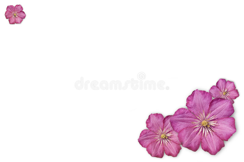 Floral Background. In pink color royalty free stock image
