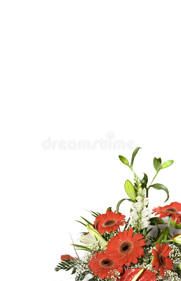Floral Background. Ox-eye daisy bouquet on white background (vertical composition royalty free stock photography