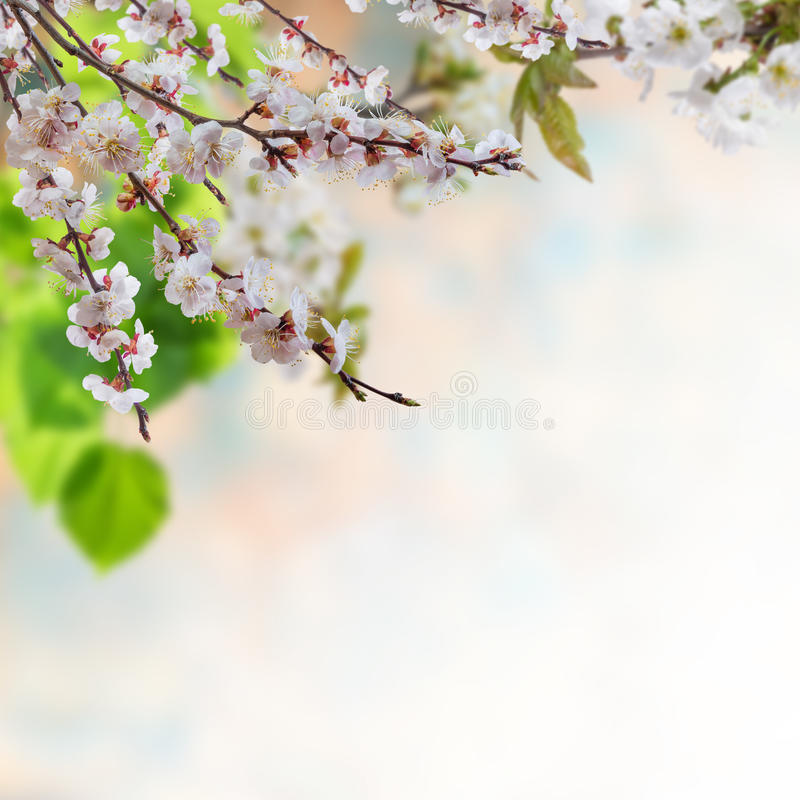 Floral background 11 royalty free stock images