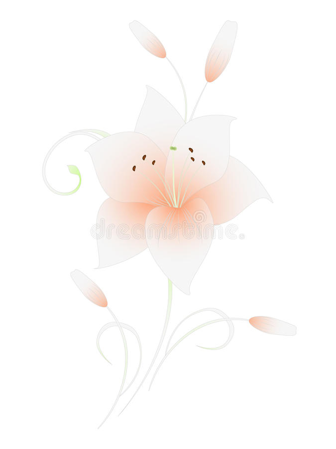 Floral background with lilies, element for design. royalty free illustration