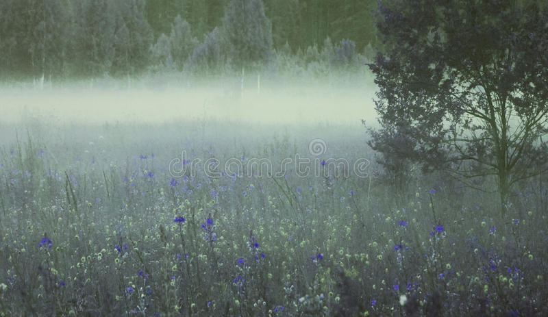 Floral background. A lot of blue and yellow flowers bloom in the summer in a glade in the morning mist. stock photo