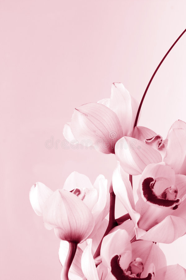 Floral Background: Orchid love. Orchid (orchis) colored in pink, floral background stock photos