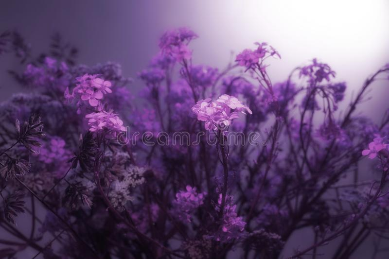 Floral background. pink purple white rustic field flowers interlacing curly little flowers sun sunset sunrise stock images