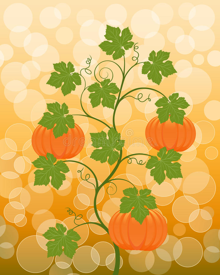Download Floral Background With A Pumpkin Stock Vector - Image: 15655651