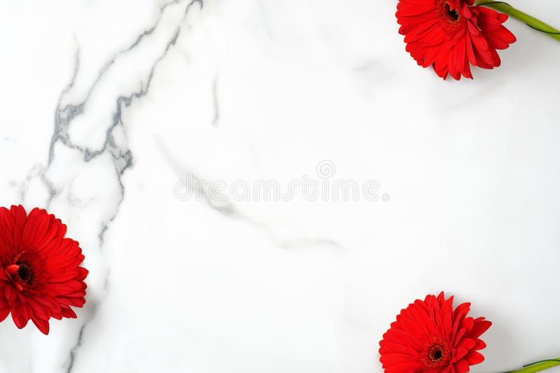 Floral background with red daisy flowers. Frame of gerber on marble background with copy space. Top view, overhead royalty free stock photos