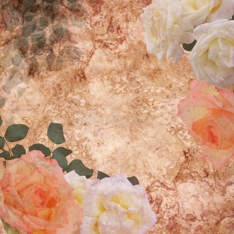 Floral background - roses stock photos