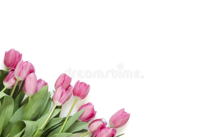 Floral background with tulips flowers on white background. Flat lay, top view. Lovely greeting card with tulips for Mothers day, w royalty free stock images